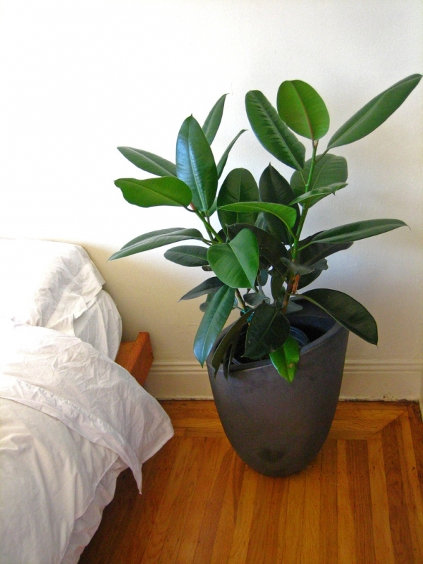 7 houseplants that will purify the air inside your home for Low maintenance air purifying plants