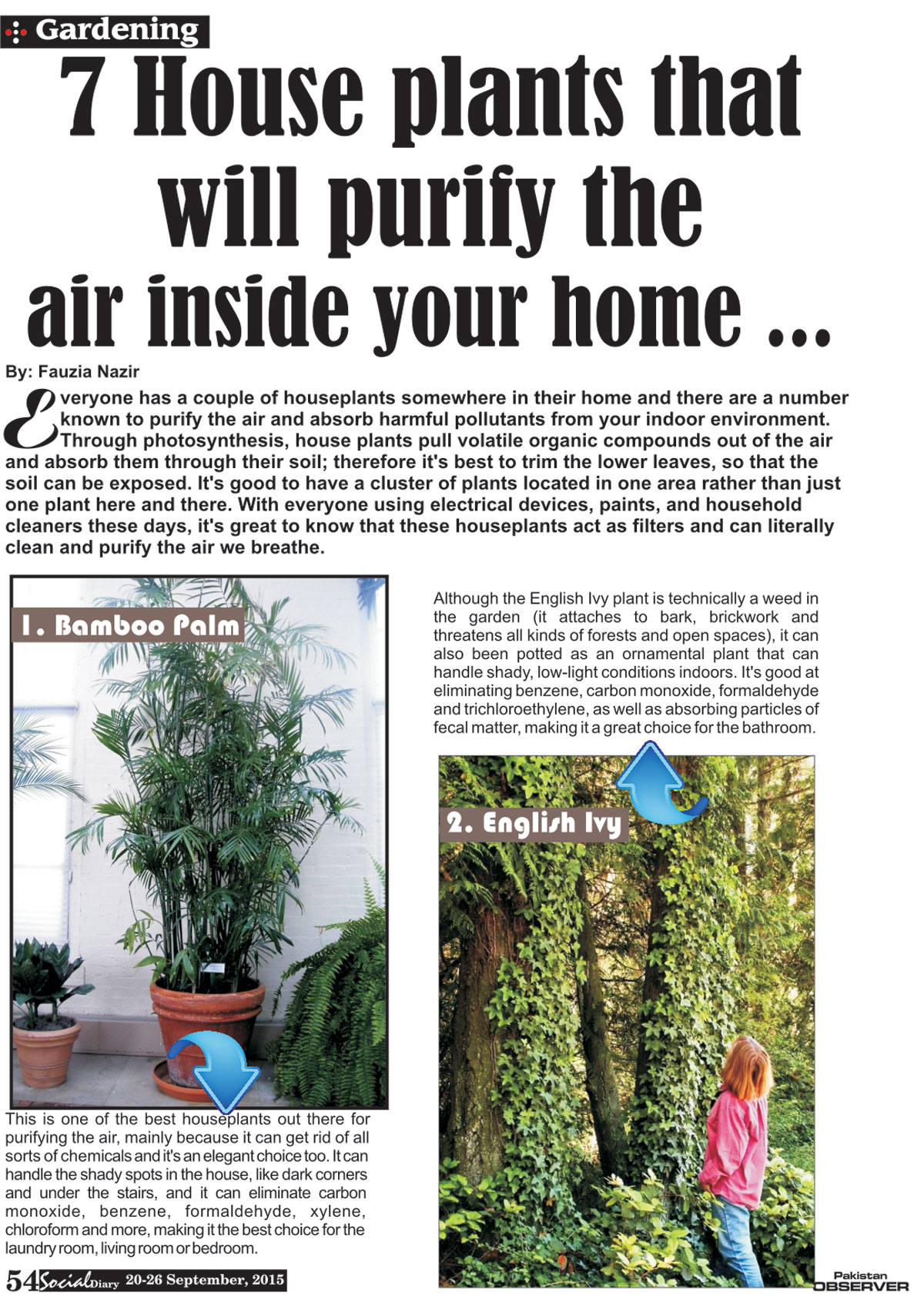 Home plants in pakistani