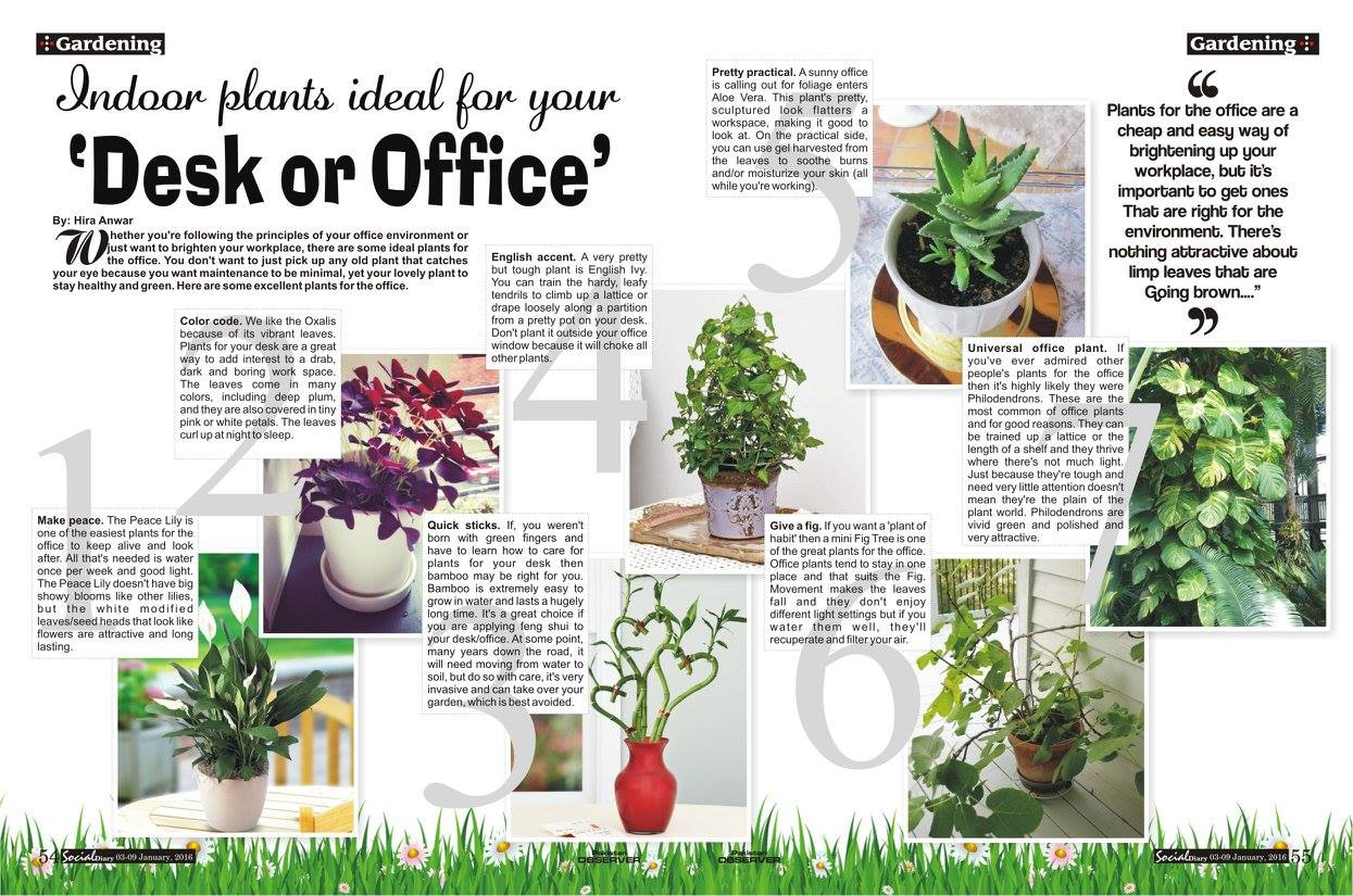 7 Indoor Plants Ideal For Your Desk Or Office Social Diary
