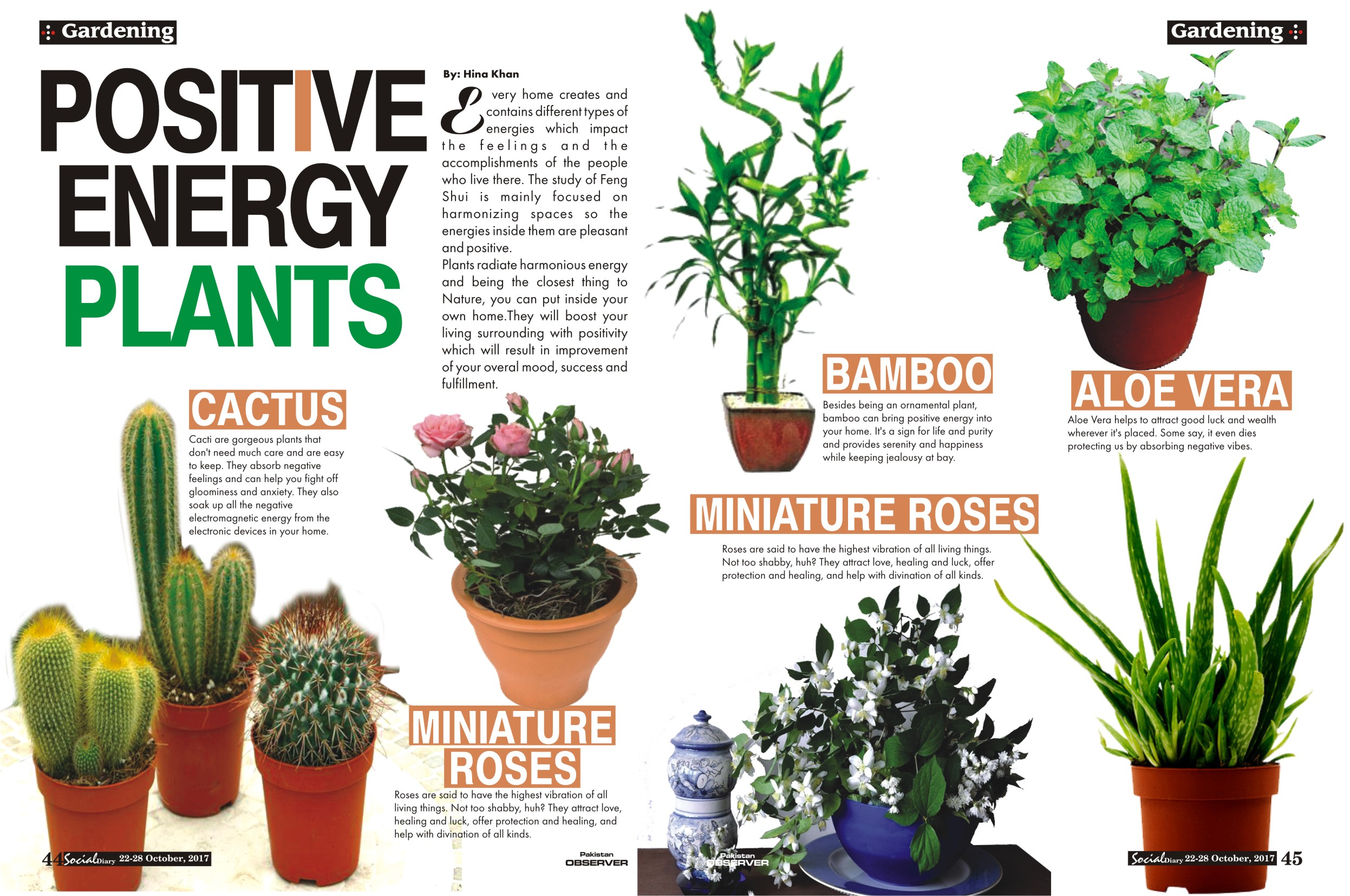 Positive Energy Plants Social Diary