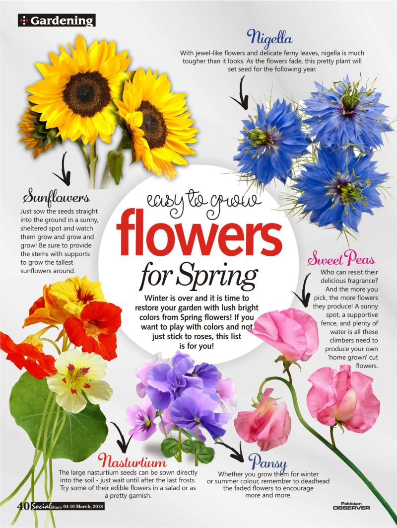 Easy To Grow Flowers For Spring Social Diary